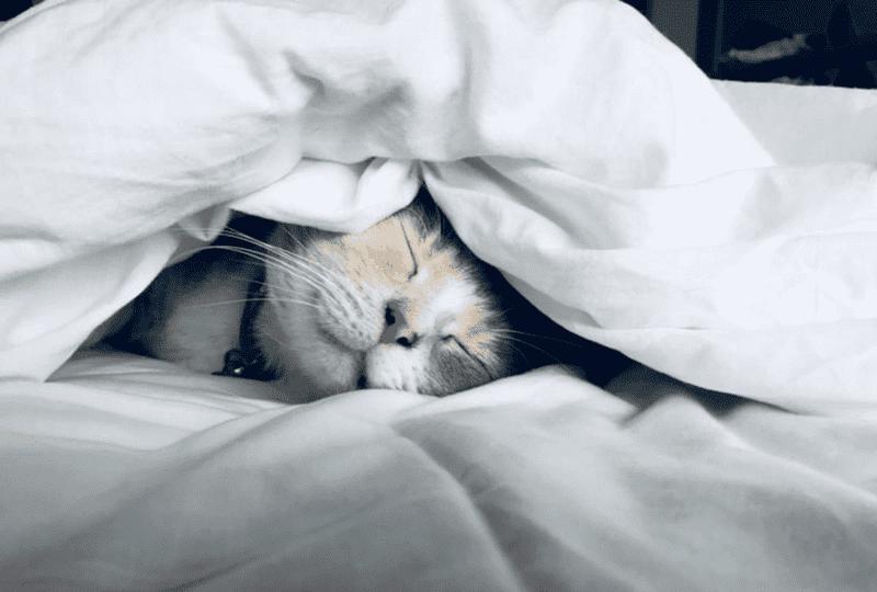 質の良い睡眠がもたらすメリットとは